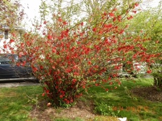 spring flowers 020