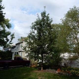 pruning7