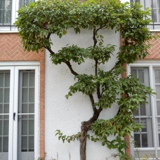 pruning8-1