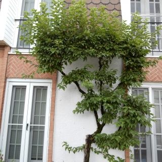pruning8